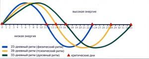 график Теория трех ритмов