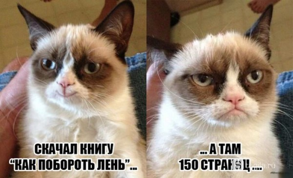 лень хмурый кот